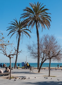 Colorful landscape with palm trees of the barcelona waterfront in spain europe