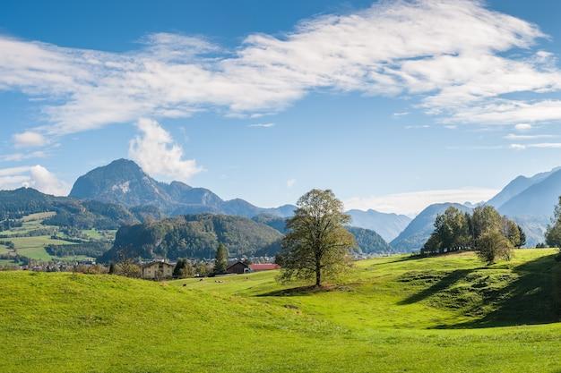 나무, 산, 푸른 하늘과 다채로운 풍경