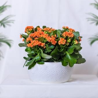 白い鍋にカラフルなランタナカマラ花植物