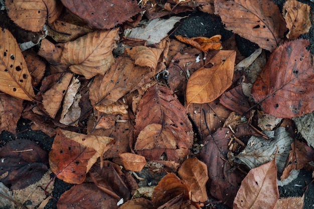 Colorful leaf texure background
