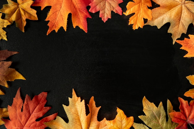 Colorful leaves on black background