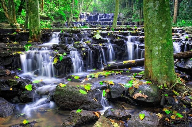 Разноцветные листья падают на землю у водопада в глубоком тропическом лесу.