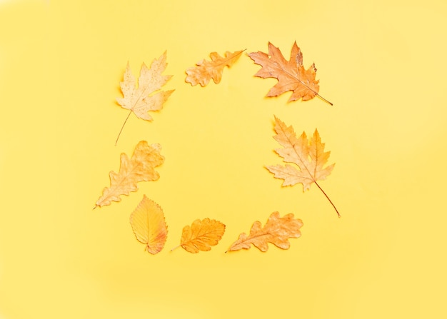 Colorful leaves frame on yellow background with copy space.