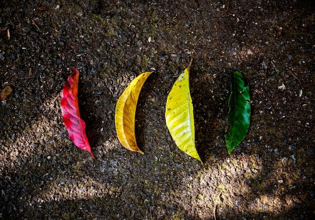 Foglie colorate sul terreno in vista aerea della natura
