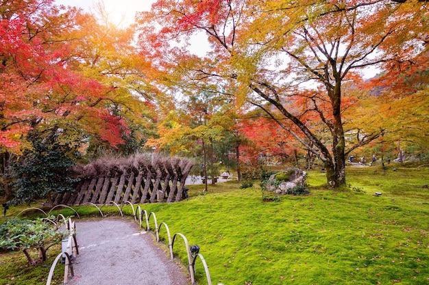 Разноцветные листья осенью. красивый парк в японии.