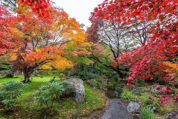 Красочные листья в осеннем парке, япония.