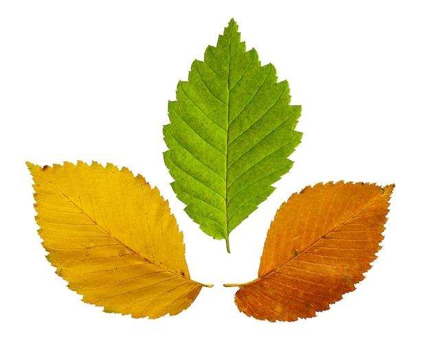 Красочные листья, изолированные на белом фоне