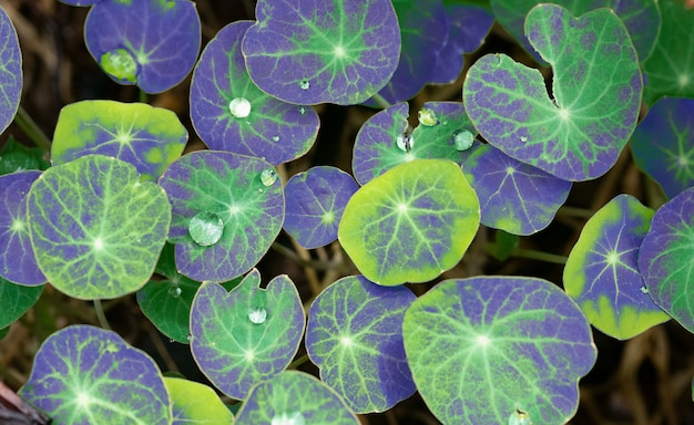 Colorful leaves of plants with water drops. top view.