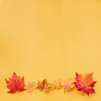 Colorful leaves on yellow background