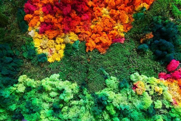 Красочный лишайник и мох