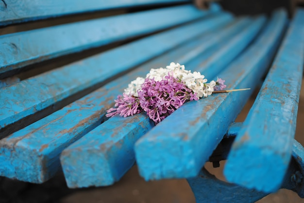 Colorful lilac branch lying on a bench in the park