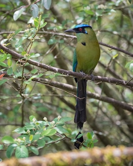 Colorful longtailed bird perched among the branches of a tree
