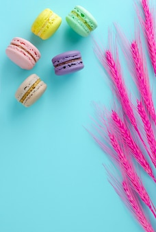 Colorful macaroons and decorative pink spikelet on bright blue background. copyspace. vertical. flat lay, overhead.