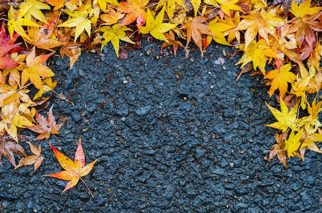 Colorful maple leaves drop on the wet ground in autumn of japan.