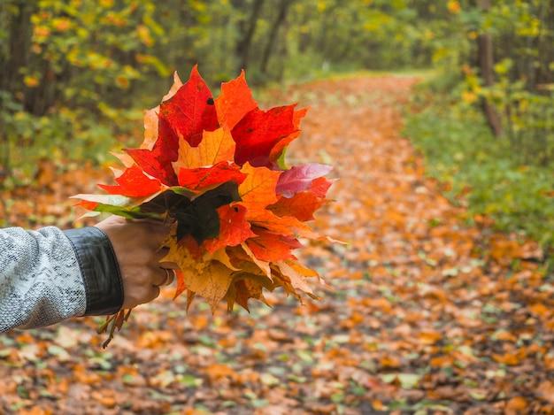 Красочные кленовые листья в руке. осеннее настроение.