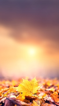 Красочные кленовые листья на земле на размытом фоне вечернего неба. волшебная осень