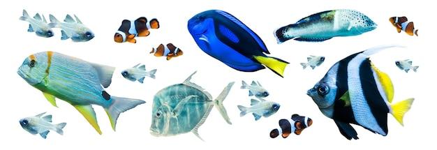 Красочные морские рыбы, изолированные на белом фоне