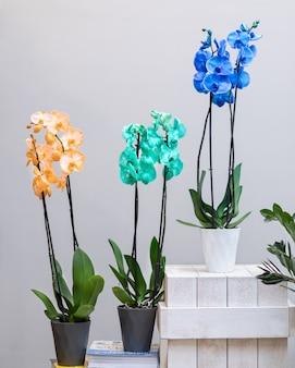 鍋にカラフルな蛾の蘭の花