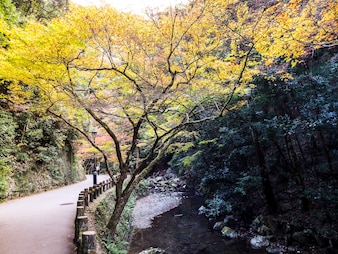 Colorful of leaves in the autumn, Nikko, Japan