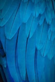 青い色合い、エキゾチックな自然の背景と質感を持つコンゴウインコの羽のカラフル