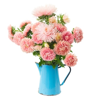 Colorful orange  aster flowers bouquet   isolated on white background