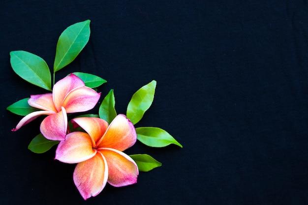 カラフルなオレンジ、ピンクの花フランジパニアジアのローカルフローラ