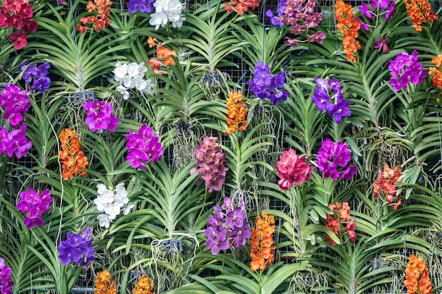 Colorful orchid flower wall