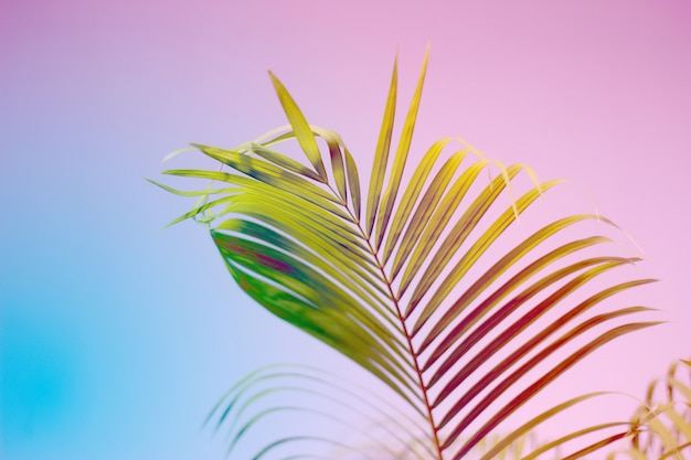 Colorful palm leaves with shadow on wall