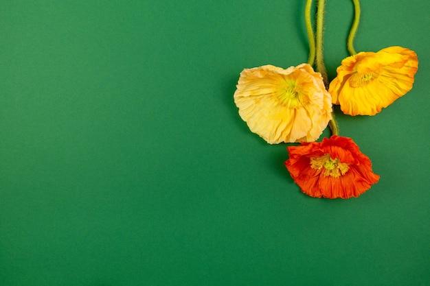 진한 녹색 표면에 화려한 양귀비 속 동양 양 귀 비 꽃