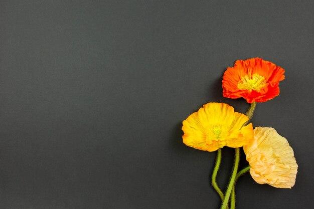 어두운 표면에 화려한 양귀비 속 동양 양 귀 비 꽃