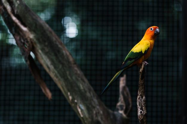 Красочный попугай на ветке дерева