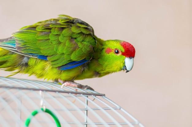 Красочный попугай сидит на клетке и хочет найти еду