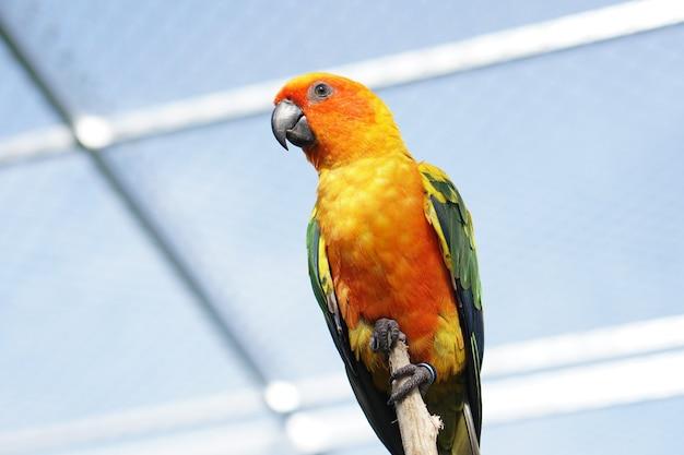 다채로운 앵무새는 새장에 보관됩니다