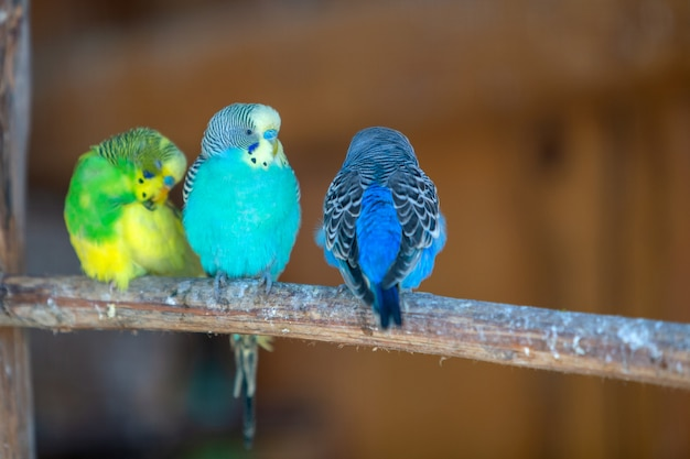 Colorful parrots in a cage at a zoo.
