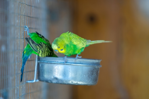 Colorful parrots in a cage at a zoo