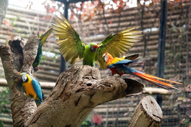 Colorful parrots in a park on the island of tenerife.