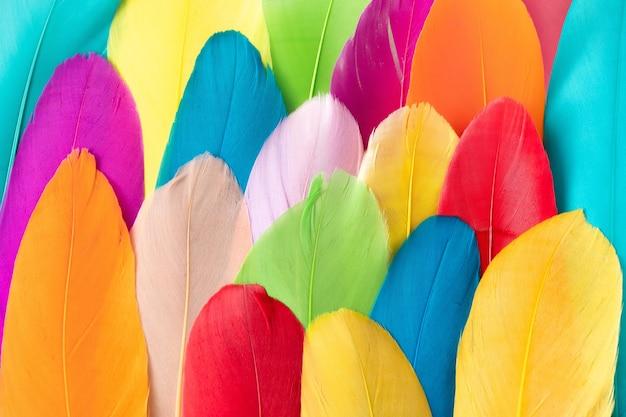 羽で作られたカラフルなパターン。ミニマル自由奔放に生きるスタイルの色の概念。フラットレイバックグラウンド。