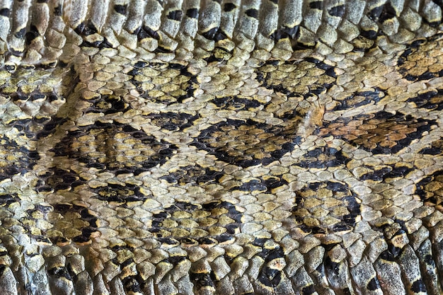 ヘビ皮のカラフルな模様の表面。
