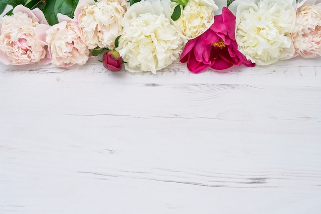 Colorful peonies border on white wooden background. copy space, top view. birthday, wedding, valentines day, mothers day concepts.