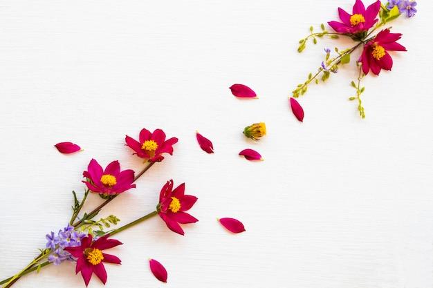 カラフルなピンクの花コスモスアレンジメントフラットレイポストカードスタイル