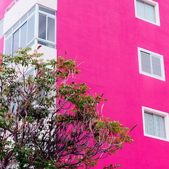 Colorful pink mood. tree on pink wall background