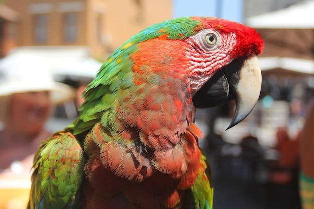 赤いコンゴウインコのカラフルな肖像画。エキゾチックな熱帯の鳥