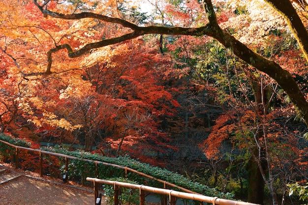 Colorful public park in japan