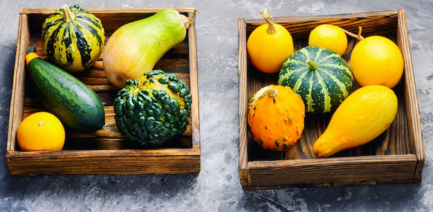 Colorful pumpkin collection