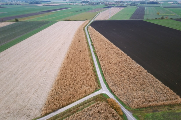 Colorful and rectangular fields with corn and wheat from a bird's eye view