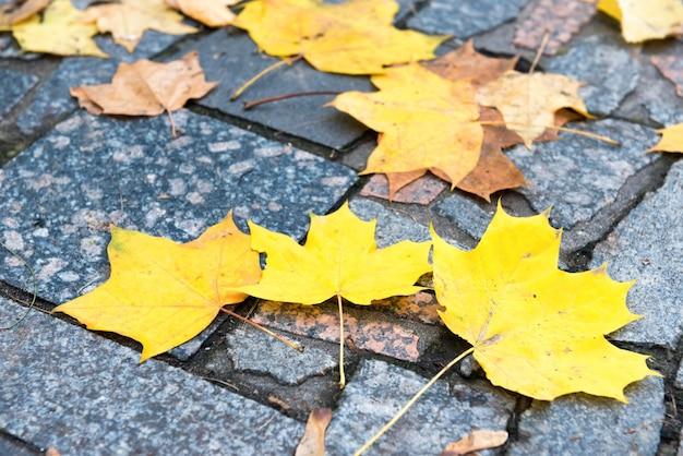 돌 패턴에 화려한 붉은 색과 오렌지색 단풍. 가을 배경