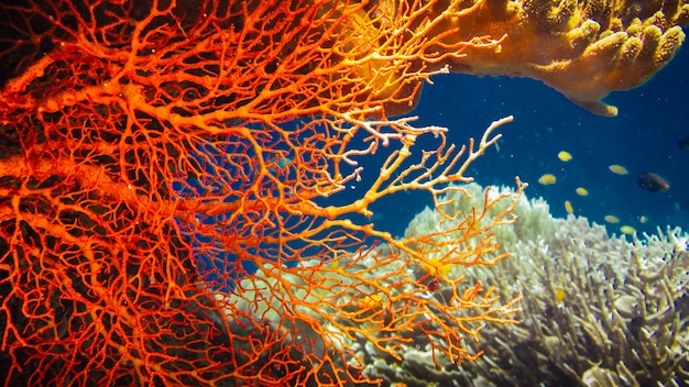 Colorful red hard corals and some coral fish around on kri, raja ampat, indonesia.