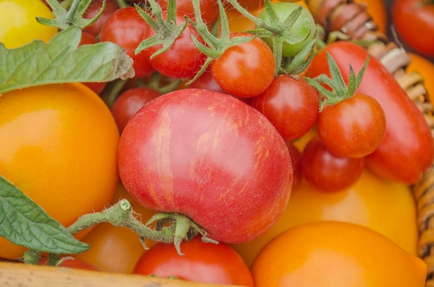 Colorful  red, yellow, orange, green tomatoes.