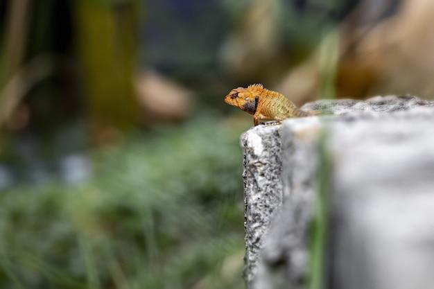 Красочная рептилия, сидящая на скале