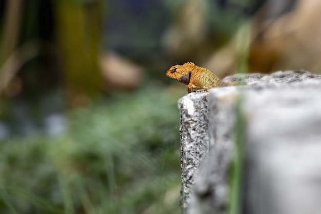 Colorful reptile sitting on rock